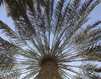 Palmträdormbunksblad i perspektiv Royaltyfri Fotografi