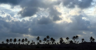 Palmträdpanorama arkivbild