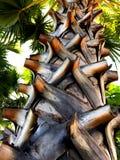 Palmträdperspektiv Fotografering för Bildbyråer