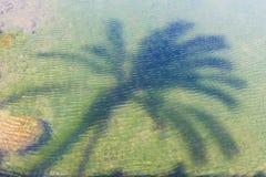 Palmträdreflexion i vatten, madeiraö, avkopplingbegrepp Royaltyfria Bilder