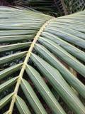 Palmträdsidor Royaltyfri Fotografi