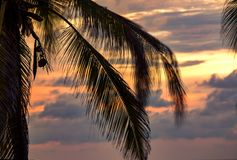 Palmträdsidor som blåsas av vinden royaltyfri fotografi