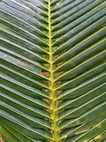 Palmträdsidor, tropiskt väder, Thailand fotografering för bildbyråer