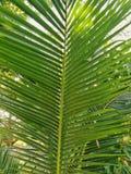 Palmträdsidor, tropiskt väder, Thailand arkivbilder