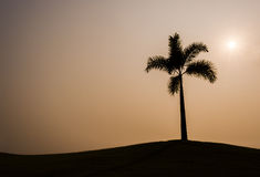 PalmträdSilhouette Royaltyfria Bilder