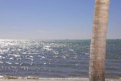 Palmträdskäll med vatten i bakgrunden Royaltyfri Foto