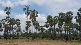 Palmträdskog Royaltyfri Fotografi