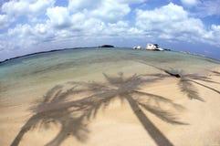 Palmträdskuggor Arkivfoto