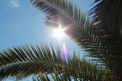 Palmträdsol arkivbilder