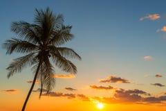 Palmträdsolnedgång i Costa Rica arkivbild