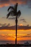 Palmträdsolnedgång med personsammanträde på en bänk som ut ser till s Arkivfoton