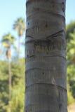 Palmträdstam upp slut royaltyfri bild