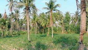 Palmträdstammar med grönt gräs för långa sidor på jordning arkivfilmer