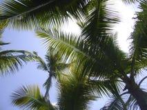 Palmträdstrand Carrillo Costa Rica Fotografering för Bildbyråer