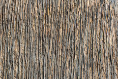 Palmträdtextur Arkivbilder