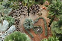 Palmträdträdgård Arkivbilder