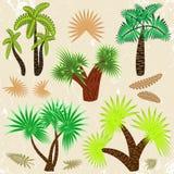 Palmträduppsättning Royaltyfri Fotografi