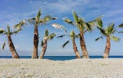 Palmträdväg Arkivfoto