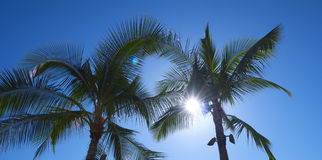 palmträdwaikiki Arkivbild