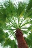 palmträd Arkivfoto
