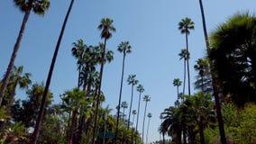 Palmtr?den av Beverly Hills - loppfotografi stock video