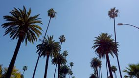 Palmtr?den av Beverly Hills - loppfotografi arkivfilmer