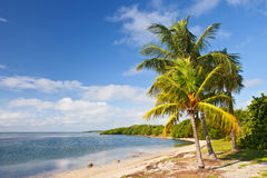 Palmträd, hav och blå himmel på en tropisk strand Arkivfoton