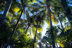 Palmträd i varmt solljus Arkivbilder