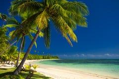 Palmträd och en vit sandig strand på Fiji Royaltyfri Foto
