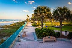 Palmträd och gångbana längs stranden i Daytona Beach, Florida Royaltyfri Foto