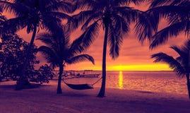 Palmträd och hängmatta på den tropiska stranden Royaltyfri Foto