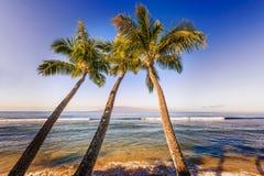 Palmträd och Stilla havet i Hawaii Arkivfoton