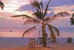 palmträd på den Patong stranden mot bakgrunden av solnedgången Arkivbilder