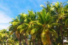 Palmträd på en tropisk strand, himlen i bakgrunden Summe Royaltyfri Fotografi