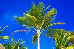 Palmträd på en tropisk strand, himlen i bakgrunden Summe Arkivbild