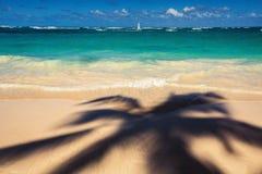 Palmträd skuggar på den tropiska stranden Punta Cana, den beträffande dominikanen Arkivbild