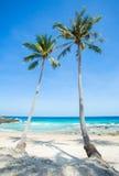 Palmträd över den härliga tropiska sandstranden Royaltyfria Foton