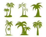 Palmträdbild Royaltyfri Fotografi