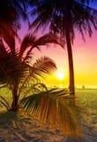 Palmträdkontur på den tropiska stranden på solnedgången Arkivbilder
