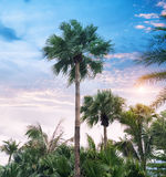 Palmträdkontur på paradissolnedgång Arkivbild
