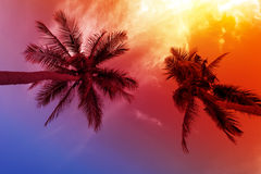 Palmträdsolnedgång på stranden Royaltyfria Bilder