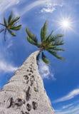Palmträdöverkant mot blå himmel Royaltyfria Foton