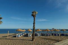 Palmtree στους αμμόλοφους Στοκ Εικόνα