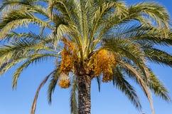 Palmtree στο φως του ήλιου, Νίκαια, Γαλλία Στοκ εικόνες με δικαίωμα ελεύθερης χρήσης