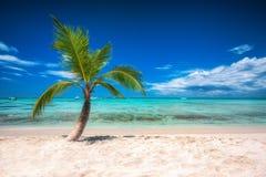 Palmtree и тропический остров приставают к берегу в карибском море Стоковое Изображение RF
