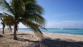 Palmtree на пляже младенца Стоковое Изображение