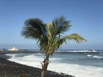 Palmtree на пляже Стоковые Фото