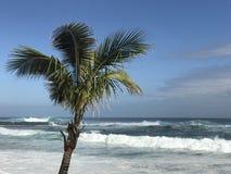 Palmtree на пляже Стоковые Изображения RF