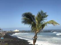 Palmtree на пляже Стоковое Изображение RF
