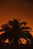 Palmtree под звездами Стоковые Изображения RF